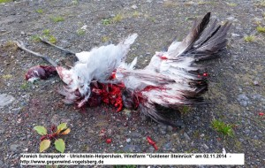 Crane killed by WF in Germany 3