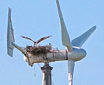 Osprey nest on wind turbine