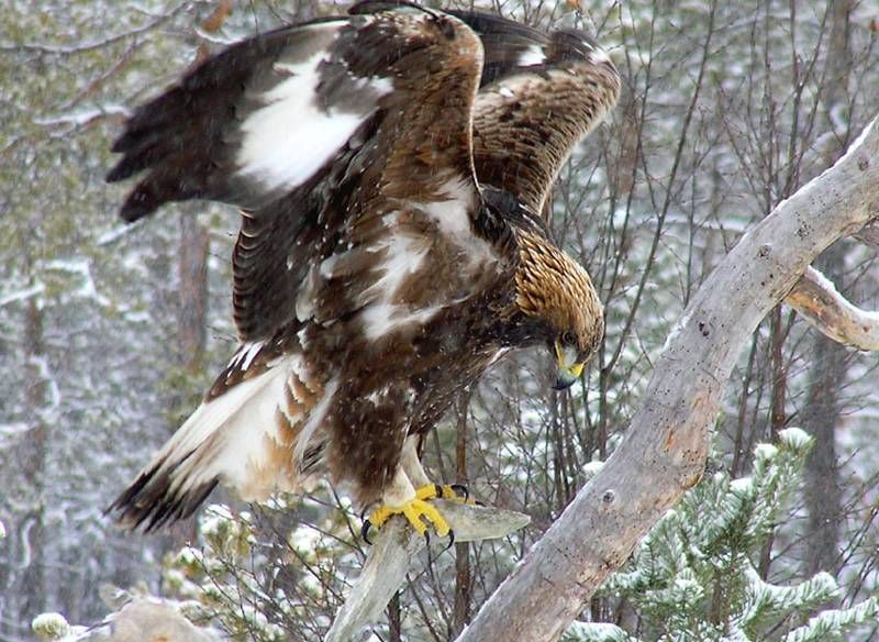 letter from our vice president, usa | save the eagles international